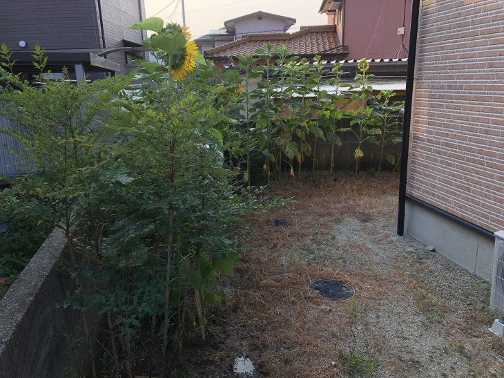 福岡県古賀市立小野小学校から風船ヒマワリ