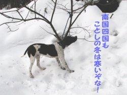 犬だけど寒い冬はイヤダー!