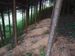ヒノキが植林された山に鋸くずを施肥 弘形工芸から出た鉋屑や鋸屑は焼却処理しないで、自然に帰っています。